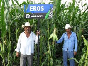 Productores de Elote siembran Eros