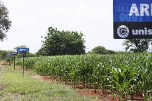 Parcela con estrés de sequía, Zapotlanejo, 2011, distribuidor Marroquin